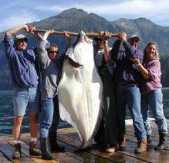 Welcome to Baranof Wilderness Lodge Halibut Fishing